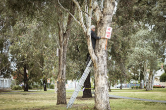 Trees in Gandolfo Park, near Moreland railway station, that are now gone.