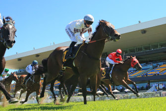 Count de Rupee is a good chance to win first up on his home track on Saturday.