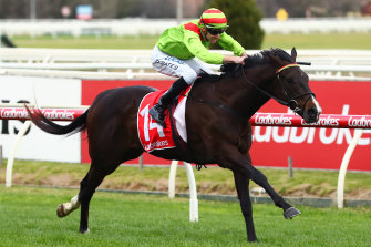 Begood Toya Mother returns to the races for the first time since his Rupert Clarke Stakes win.