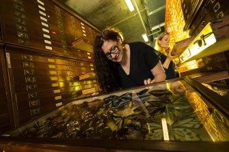 Melbourne Museum senior curator Rebecca Carland.