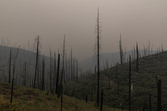 The massive fires in California and up the west coast have raised questions about the viability of forest carbon credits.