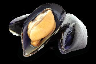 Blue mussels.