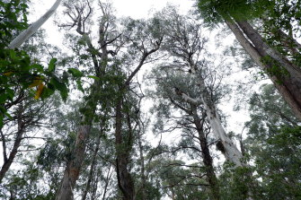Conservationists have had a legal win in their campaign against logging East Gippsland's post-bushfire forests.