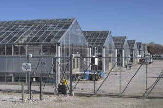 Greenhouses at the University of Nevada, Reno, where researchers are studying whether they can transplant the plant or seeds germinating in the greenhouse to the desert to bolster the native population.