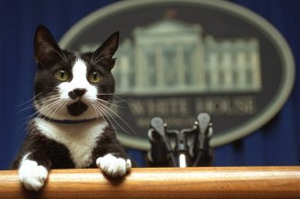 Former President Bill Clinton's cat Socks peers over the podium in the White House briefing room in Washington in 1994.