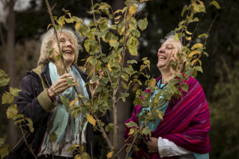 Jenny Happell and Sandra Pullman with an elm they helped to propagate in the Melbourne Botanic Gardens.