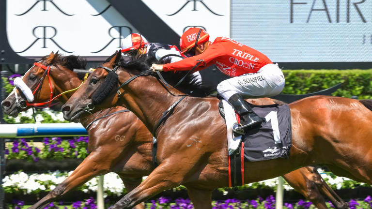 On the way up: Emperor's Way is out to show he could be a Metropolitan contender at Rosehill on Saturday.