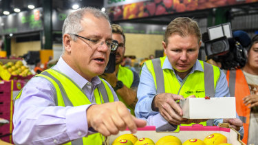 Scott Morrison and Craig Laundy handle fruit at the Homebush markets in 2017.