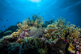 A two-degree rise in temperatures could spell the end for the Great Barrier Reef.