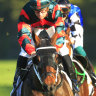 Waller and Sydney crop on right track as Rosehill outshines Brisbane
