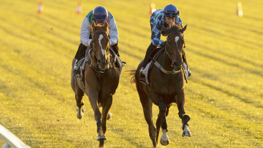 Finche on the outside of Youngster in a Melbourne Cup hit-out at Flemington last Tuesday.