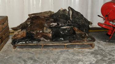 The drugs were allegedly hidden inside frozen cow hides.