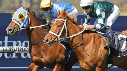 Waller to bring up group 1 ton on Sydney's 'grand final' day