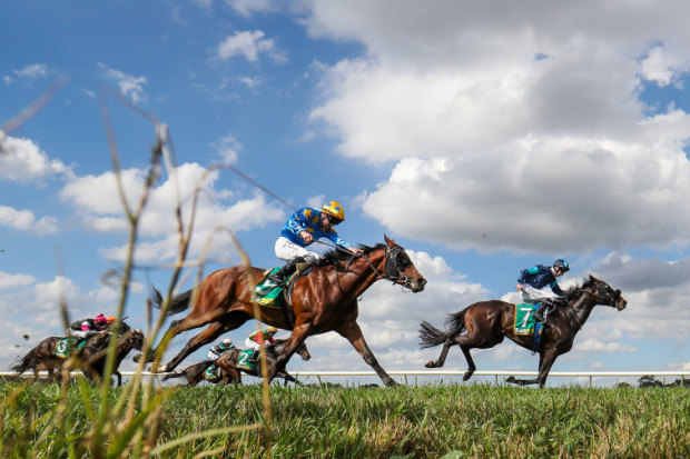 There are widespread calls to track every racehorse after it finishes racing