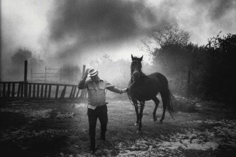 Bill Chester moves one of his horses as fire threatens his property at Forest Way. December 17, 1979.