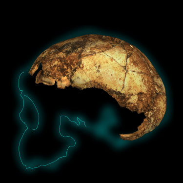 A two-million-year-old fossil named DMH 134, reconstructed from more than 150 individual fragments: the earliest known skull of Homo erectus.