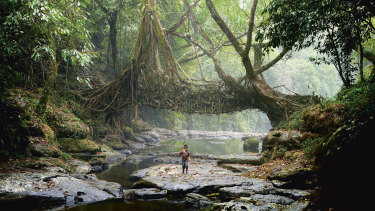 A young fisherman walks under a root bridge at Mwlynnong village, India.