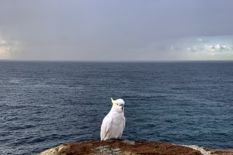 After taking this shot at Coogee, Michele Mossop considered Australia's wildlife from a foreigner's perspective.