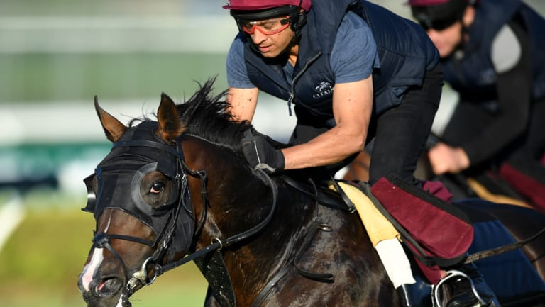 Irish raider: US Navy Flag goes through his paces at Canterbury on Tuesday.