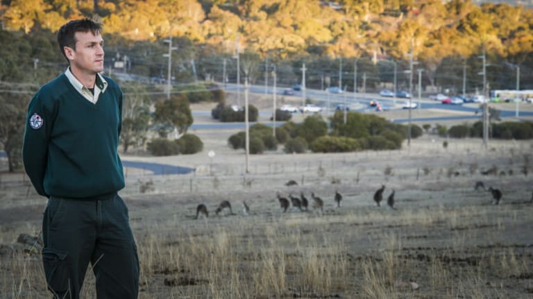 ACT Parks and Conservation senior ranger Nick Daines with a mob of kangaroos at Mount Taylor reserve, near Athllon Drive.