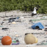 The uninhabited island where the world's plastic ends up