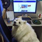 Link the dog at Matt Bungard's work station.