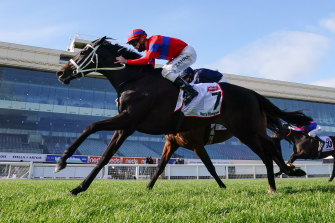 Caulfield Cup winner Verry Elleegant can hit the line with rare tenacity.