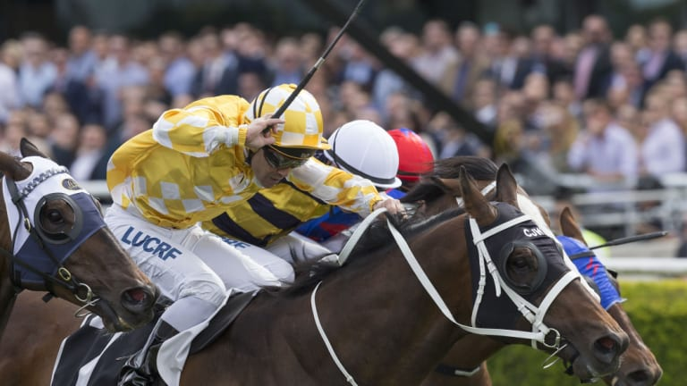 Going global: Chris Waller-trained Comin' Through will tackle the Hong Kong Mile on Sunday.