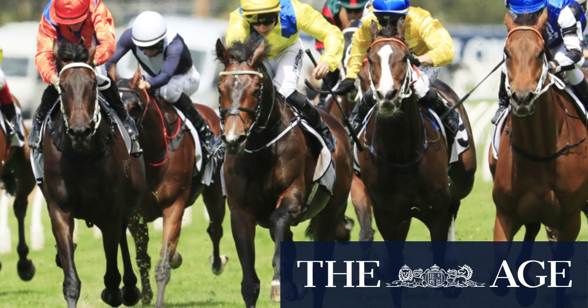 Make or break for Young Rascal, Haky with Melbourne Cup on the line