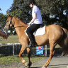 Horse riders warn government inaction will 'cost a child's life' at Centennial Park