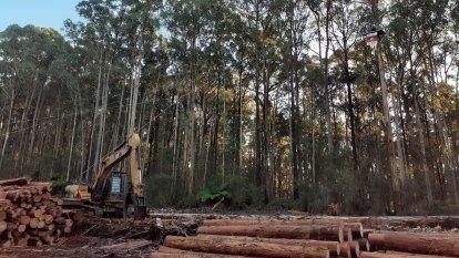 The fight over Australian logging goes global