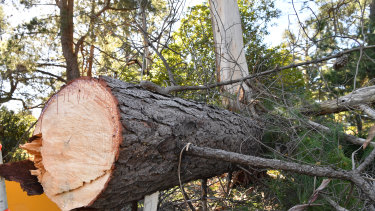 The tree in Lilydale reportedly tore down nearby power lines.