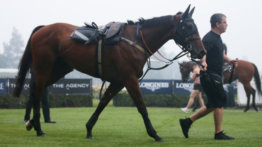 Arcadia Queen is poised to start favourite for the inaugural Golden Eagle.