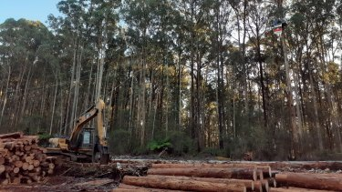 Protesters disrupt logging in Victoria's native forests.