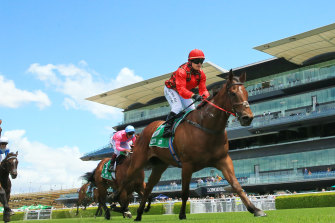 Remlaps Gem  is a great chance in the James Kirby.