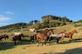 """""""As our human lives tame, restrict and contain us, a love of horses keeps a tiny bit of the ancient wildness within us all alive."""""""