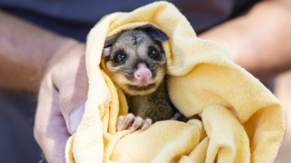 New Fyshwick centre to help treat Canberra's injured wildlife