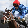 Race-by-race tips and preview for Randwick on Saturday