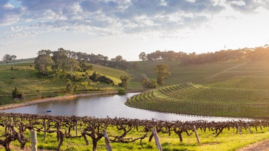 The picturesque,  contoured vines at Clarendon run down to the bottom of the property, where shiraz and cabernet give way to quiet gum trees lining the slow-moving waters of the Onkaparinga River.