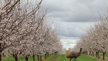 Almond producer Select Harvests' first half result was hit by a lower almond price and higher water costs.