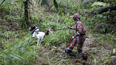 A member of a rescue team uses a sniffer dog to conduct a search and rescue operation for a missing British girl Nora Anne Quoirin.