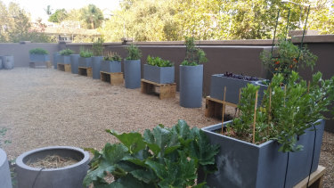 The ill-fated veggie patch at The Elan in Darlinghurst.