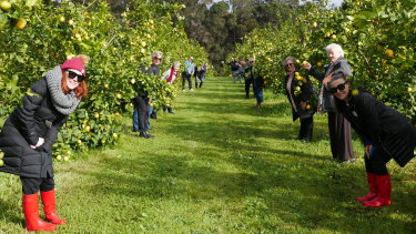 Mrs Cotterell takes a tour group to get closer acquainted with citrus in a lemon orchard.