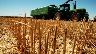 Australia is starting to import some wheat as its crop has been impacted   by the drought.