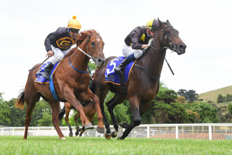 Readily Availabull (right) takes the Magic Millions Clockwise Classic with Michael Dee in the saddle in November.