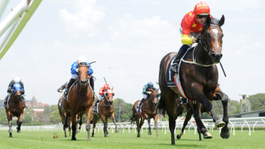 Blinkers on: Hightail will look to win his way into the Golden Slipper on Saturday.