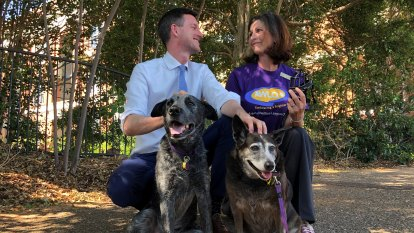 Dog owners thrown a bone, with pooches to be let on Brisbane ferries