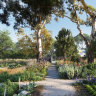 History shows us that just being in a garden can provide comfort