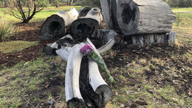 A man walked through Royal Park in Parkville to lay a bunch of purple flowers at the logs where a woman's body was found.