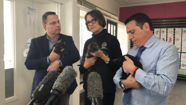 Deputy Mayor Adrian Schrinner, AWLQ strategic director Joy Verrinder and Councillor Peter Matic with foster kittens at the cat desexing program announcement.